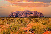 Overnight Dingo Dreaming Safari from Uluru