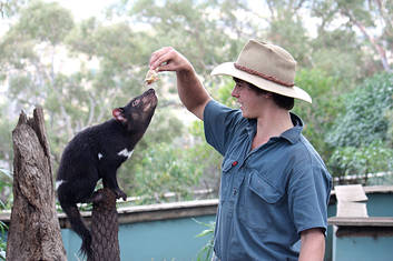 See the Tasmanian Devils up close at Bonorong Wildlife Sanctuary